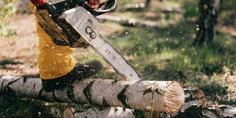 25 Best Chainsaws & Pole Saws Black friday 2021 SALES AND DEALS